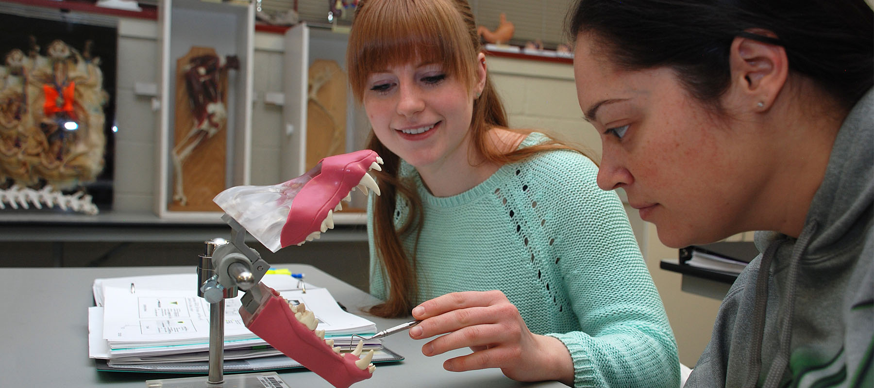 students in the vet tech look at a model of teeth of a canine