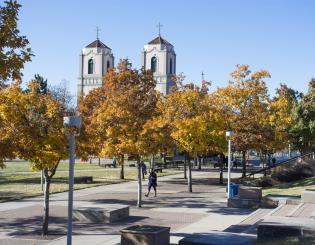 yellow and brown trees on auraria campus denver co