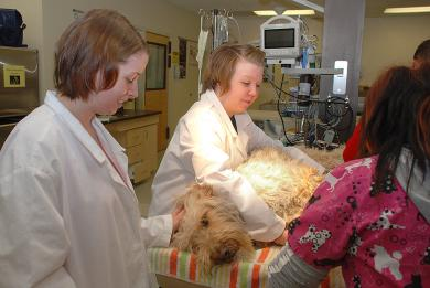image of two female vet technicians with furry doggie