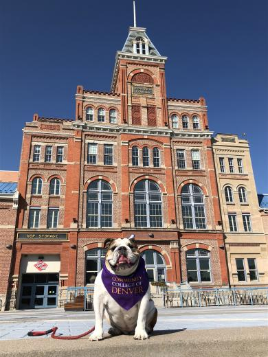 picture of a building with a bull dog in front of it.